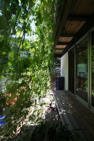 エアコンなしで夏を過ごそう!!~『5/6開催:緑のカーテンをつくろう』_b0066260_13424396.jpg