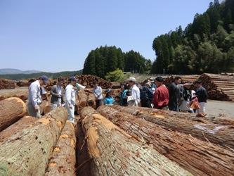 2012春・小国杉森林ツアー「木材市場」_b0112371_16591969.jpg