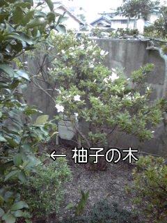 f0200871_1553766.jpg