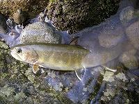 恒例の岩魚釣り_e0064783_9411075.jpg