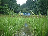 6月21日の田んぼ(月光原小・西根小)_d0247484_935391.jpg