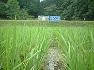 6月28日の田んぼ(月光原小・西根小)_d0247484_939367.jpg