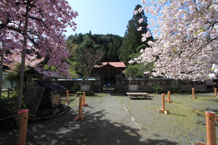 黒田百年桜_e0051888_17312440.jpg