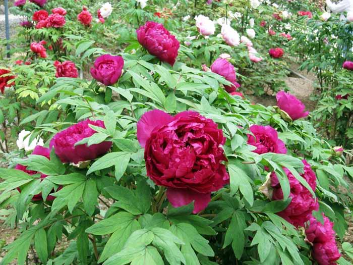 花のじゅうたん_e0016894_18123137.jpg