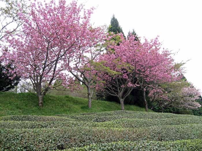 花のじゅうたん_e0016894_18143447.jpg