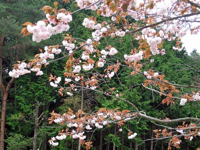 花のじゅうたん_e0016894_18145414.jpg