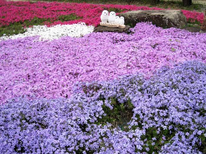 花のじゅうたん_e0016894_1884154.jpg