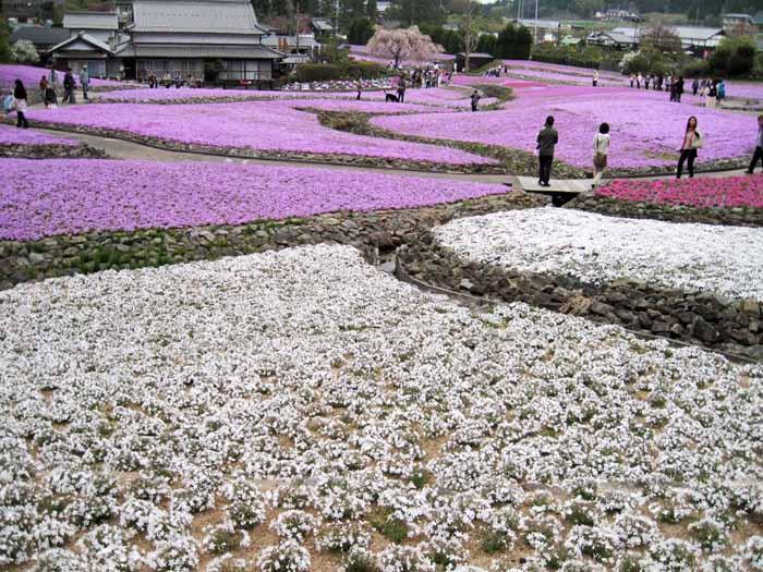 花のじゅうたん_e0016894_1892690.jpg