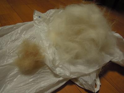 犬のコート_f0232994_4283660.jpg