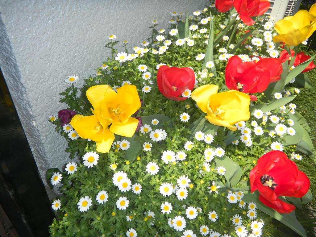 お花のある暮らし_c0195496_14313679.jpg