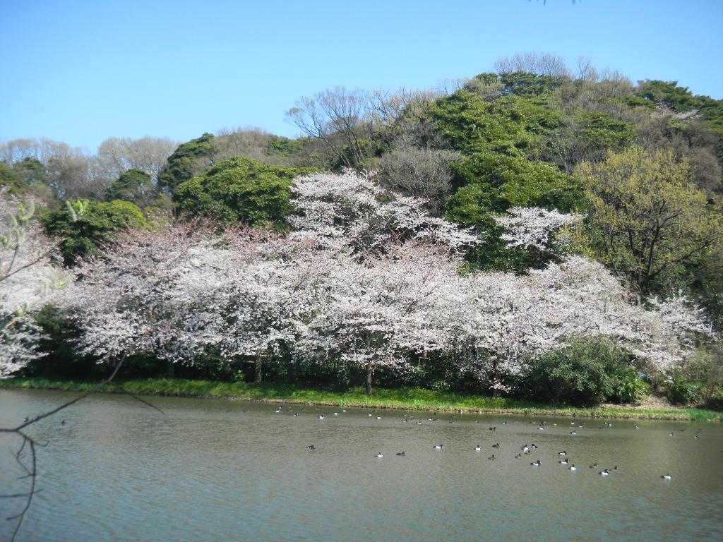 お花のある暮らし_c0195496_14505057.jpg