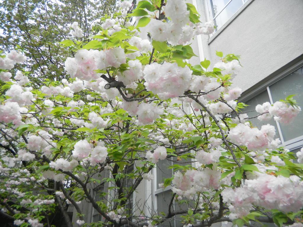 お花のある暮らし_c0195496_15282022.jpg