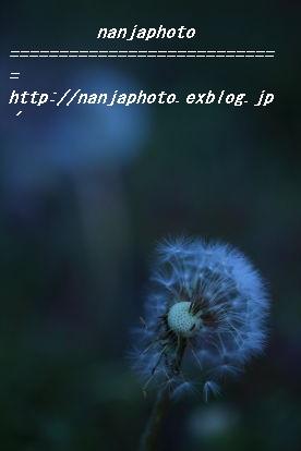 e0268999_1154182.jpg
