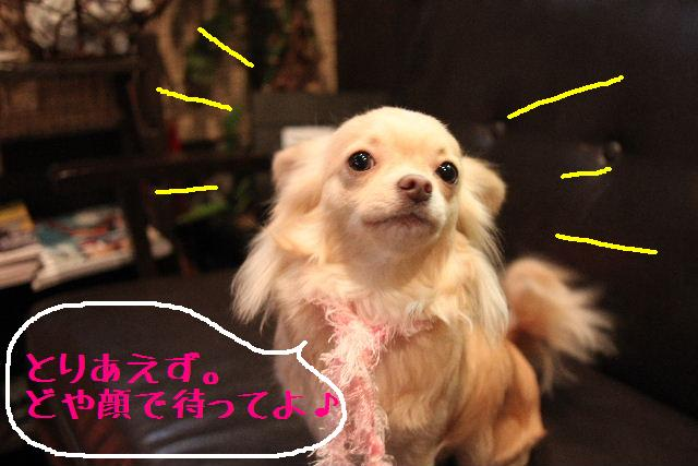 こんばんわぁ~!!_b0130018_22204065.jpg