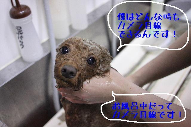 こんばんわぁ~!!_b0130018_22244787.jpg