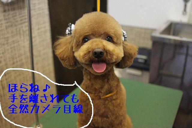 こんばんわぁ~!!_b0130018_22245866.jpg