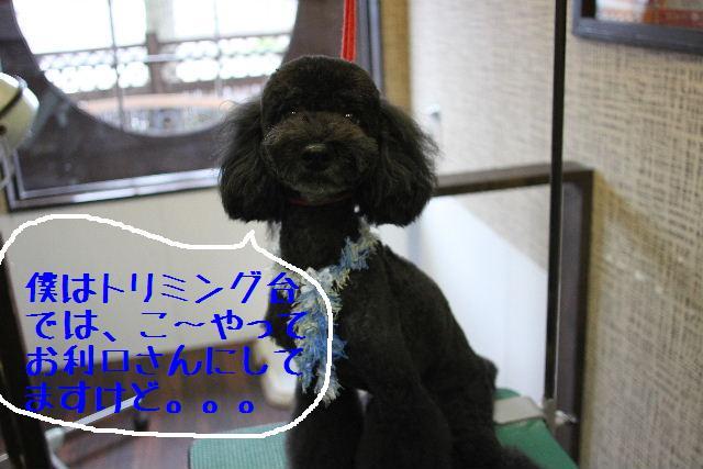 こんばんわぁ~!!_b0130018_22312241.jpg