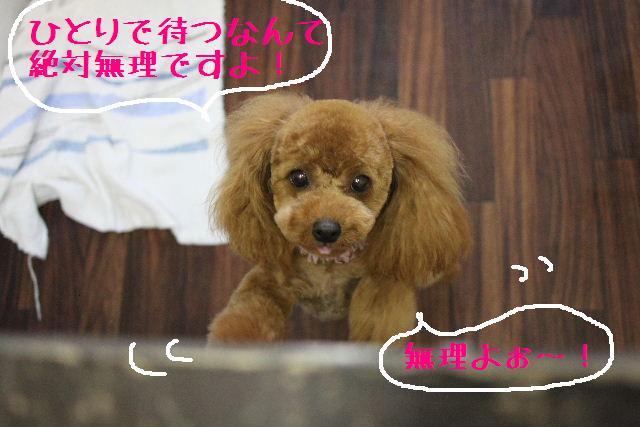 こんばんわぁ~!!_b0130018_22371527.jpg