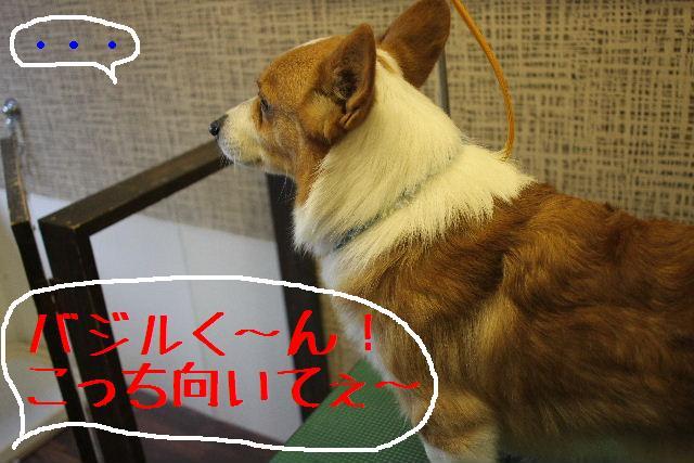 こんばんわぁ~!!_b0130018_22392618.jpg