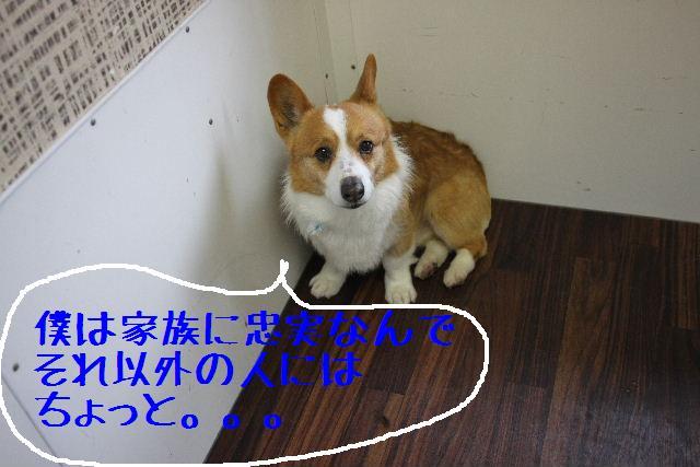 こんばんわぁ~!!_b0130018_22402160.jpg