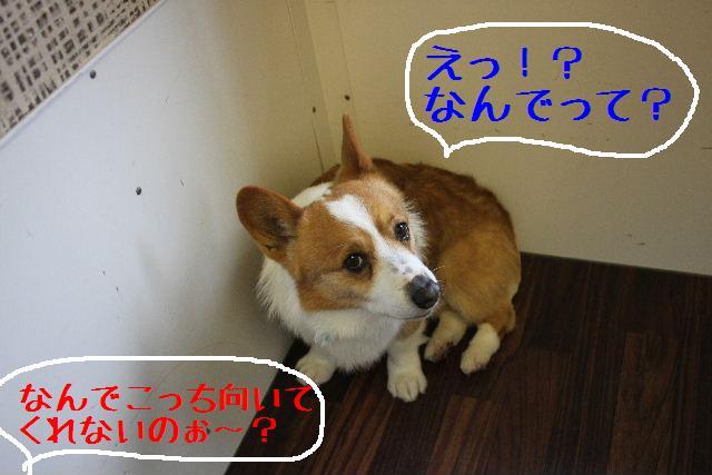 こんばんわぁ~!!_b0130018_2240746.jpg
