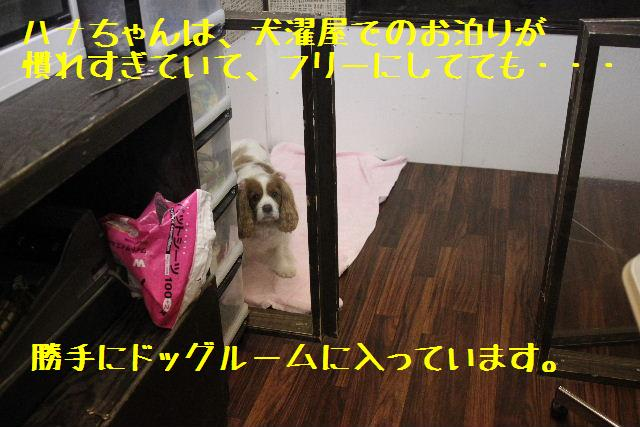 こんばんわぁ~!!_b0130018_22475659.jpg