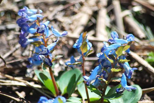 春の花2_e0120026_116278.jpg