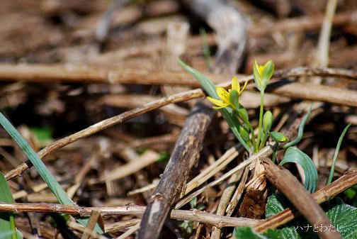 春の花2_e0120026_1173013.jpg
