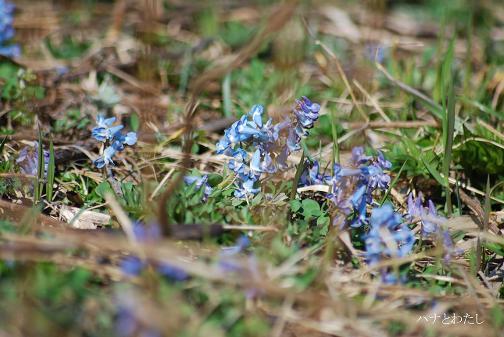 春の花2_e0120026_117976.jpg