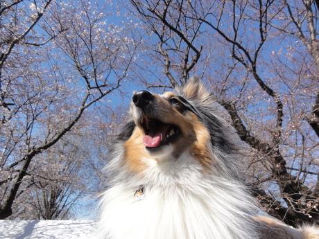 桜も散ってしまいましたが・・・_a0267851_9414985.jpg