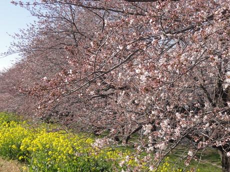桜も散ってしまいましたが・・・_a0267851_942141.jpg