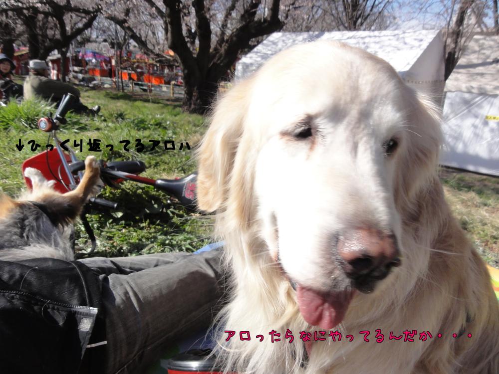 桜も散ってしまいましたが・・・_a0267851_9572534.jpg