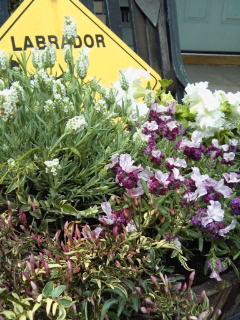 The Garden!  Vol.3_a0229658_17142337.jpg