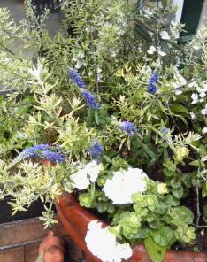The Garden!  Vol.3_a0229658_17464843.jpg