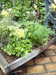The Garden!  Vol.3_a0229658_1751162.jpg