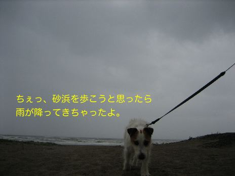 c0179472_17511585.jpg