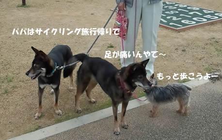b0127675_20101389.jpg