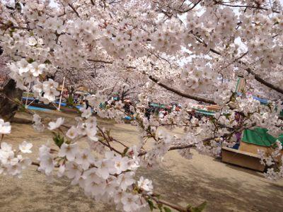 弘前桜祭り_f0166486_730494.jpg