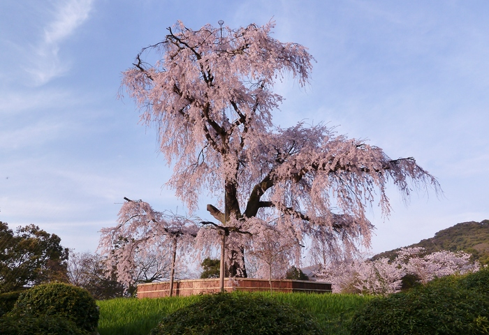 京都散策 12_b0093088_7581335.jpg