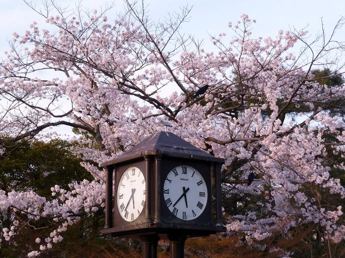 京都散策 12_b0093088_7585747.jpg