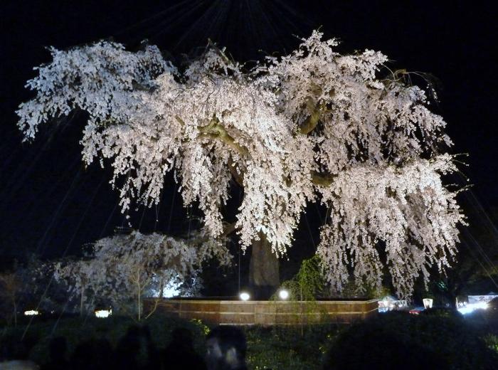京都散策 12_b0093088_759824.jpg