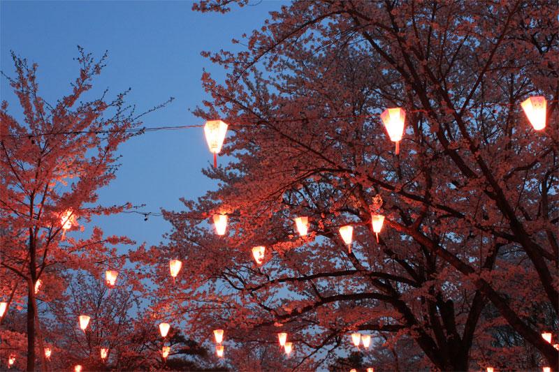 小諸に春がやってきた in 懐古園_d0217090_23461232.jpg