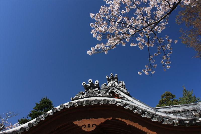 小諸に春がやってきた in 懐古園_d0217090_23461513.jpg