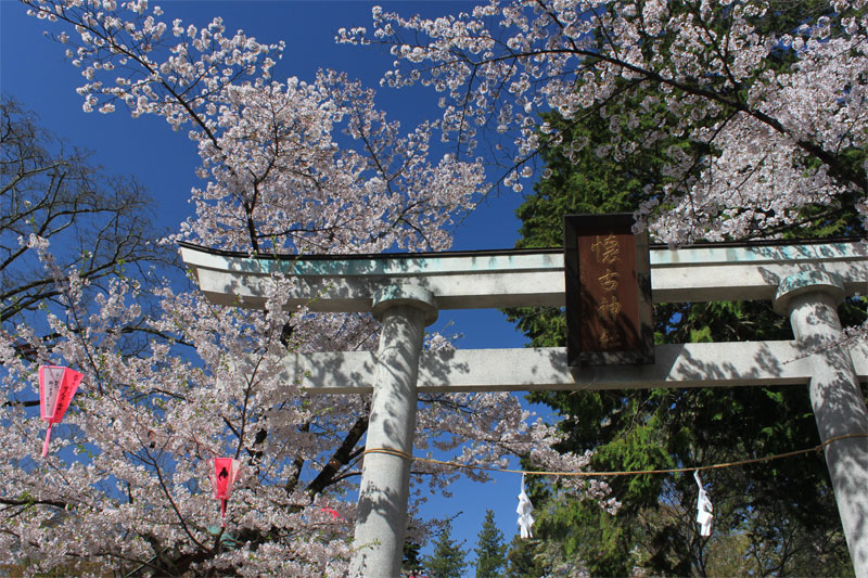 小諸に春がやってきた in 懐古園_d0217090_23461520.jpg
