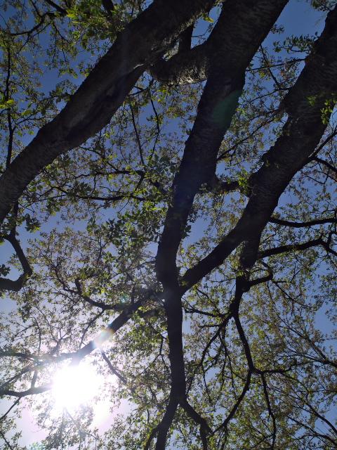 故郷の風景 葉桜_f0024992_833198.jpg
