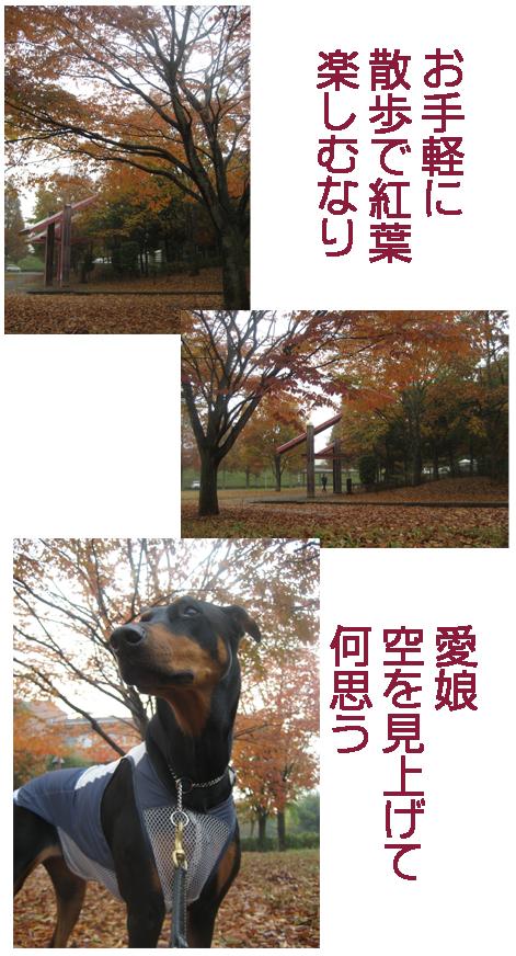 b0079523_14503493.jpg