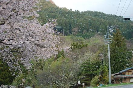 桜吹雪_d0249047_12484347.jpg