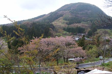 桜吹雪_d0249047_12503012.jpg
