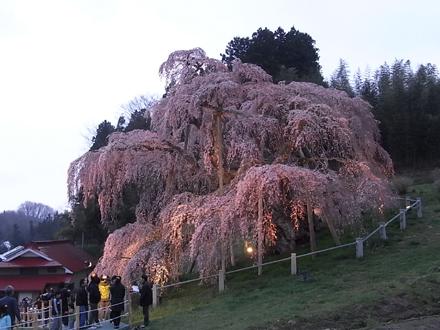 『小和滝の家(こわだきのいえ)』~桜めぐり_e0197748_18224823.jpg