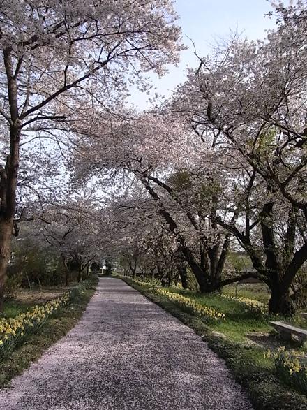『小和滝の家(こわだきのいえ)』~桜めぐり_e0197748_18233100.jpg